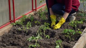 Close-Up of Young Woman Working in a Greenhouse stock video