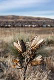Close up of yucca plant in winter royalty free stock photos