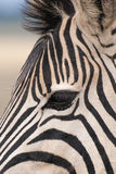 Close-up of Zebra eye Royalty Free Stock Image