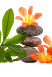 A close up of Zen stones with flowers. Zen stones with flowers and green plant on white background Royalty Free Stock Photo