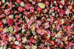 Close-upbeeld van de mooie achtergrond van de bloemenmuur royalty-vrije stock afbeelding