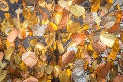 Close-upbeelden van kroonluchters aan de bladeren dat van vormpho worden ontworpen stock illustratie