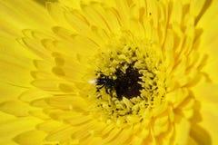 Close-upbloemen Royalty-vrije Stock Afbeeldingen