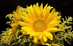 Close-upboeket van zonnebloem Stock Afbeelding