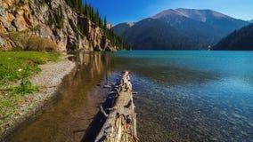 Close-upboomstam van pijnboomboom in het meer Kolsay 4K TimeLapse - September 2016, Alma Ata en Astana, Kazachstan stock footage