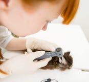 Close-updierenarts die een cat& x27 onderzoeken; s oor met een oorspiegel royalty-vrije stock fotografie
