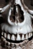Close-upfoto van de menselijke schedel Stock Foto's