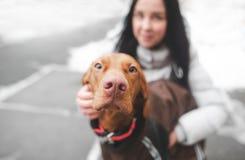 Close-upfoto van een bruine leuke hond gekleed in hondkleren en een meisjes glimlachende huisvrouw op de achtergrond stock afbeelding