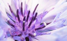 Close-upfoto van een purpere en witte bloem voor achtergrond of textuur Stock Afbeeldingen