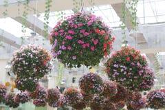 Close-upfoto van het hangen van mooie bloeiende bloemen stock afbeelding