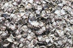 Close-upfoto van Mooie Verstarde Shells royalty-vrije stock afbeeldingen