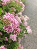 Close-upfoto van roze bloemen op de boom stock fotografie