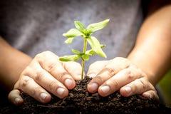 Close-uphand die jonge boom in grond planten Stock Fotografie