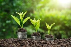 Close-uphand van het muntstuk van de persoonsholding met grond en jonge plant o Stock Foto