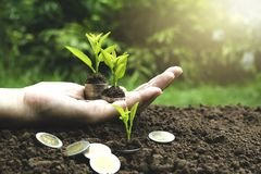 Close-uphand van het muntstuk van de persoonsholding met grond en jonge plant o Royalty-vrije Stock Afbeeldingen