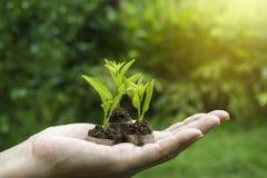 Close-uphand van het muntstuk van de persoonsholding met grond en jonge plant o Royalty-vrije Stock Foto