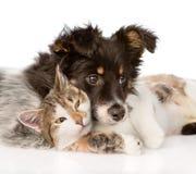 Close-uphond met kat samen Op witte achtergrond stock foto