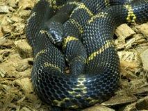 Close-uphoofd van Reptiel Stock Afbeeldingen