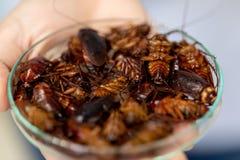 Close-upkakkerlak voor studie die parasieten in laboratorium vinden royalty-vrije stock foto