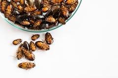 Close-upkakkerlak voor studie die parasieten in laboratorium vinden stock foto's