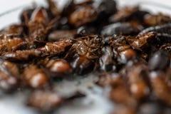 Close-upkakkerlak voor studie die parasieten in laboratorium vinden royalty-vrije stock afbeelding