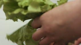 Close-uplengte van slabladeren die de vrouwelijke handen in een gootsteen wassen stock video
