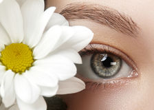 Close-upmacro van mooi vrouwelijk oog met perfecte vormwenkbrauwen Schone huid, manier naturel samenstelling Royalty-vrije Stock Afbeeldingen