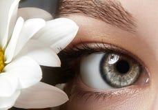 Close-upmacro van mooi vrouwelijk oog met perfecte vormwenkbrauwen Schone huid, manier naturel samenstelling Goede Visie De lente Royalty-vrije Stock Afbeeldingen