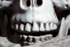 Close-upmening over de menselijke schedel Stock Foto