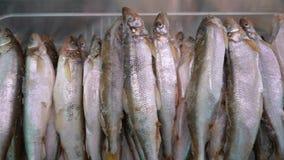 Close-upmening over partij van bevroren spieringsvissen op teller bij vissenmarkt stock videobeelden