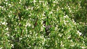 Close-upmening van appelbomen op de wind stock video