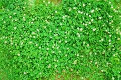 Close-upmening van de lente groen gras Stock Fotografie