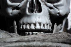 Close-upmening van de menselijke schedel Royalty-vrije Stock Afbeelding