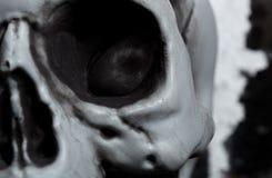 Close-upmening van de menselijke schedel Royalty-vrije Stock Foto's