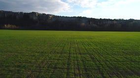 Close-upmening van een groot groen gebied met hoge bergklip op de achtergrond tegen blauwe hemel lengte Mooi stock video