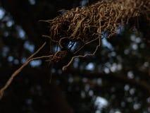 Close-upmening van exotische boom lange naakte wortel zoals takken in bruin met selectieve nadruk en bokeh stock fotografie