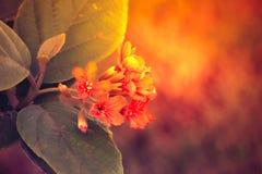 Close-upmening van geeloranje bloem Royalty-vrije Stock Foto's