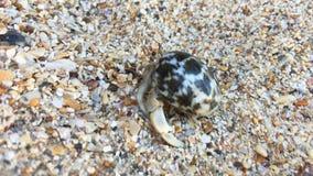 Close-upmening van kluizenaarkrab met shell stock footage