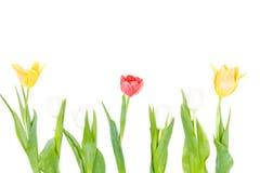 Close-upmening van mooie bloeiende rode en gele tulpen Stock Afbeelding