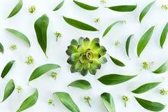 Close-upmening van mooie huwelijkssamenstelling met gouden ringen en groene bladeren Royalty-vrije Stock Afbeelding