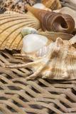 Close-upmening van zeeschelpen in de gebruikte rieten mand verticaal Stock Afbeeldingen