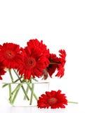 Close-upod rode gerbermadeliefjes in vaas Stock Afbeelding