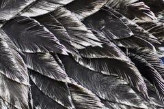 close upp Dekorativ svart fågel Royaltyfria Foton