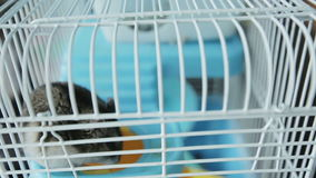 close upp En jungar hamster i en bur stock video