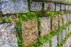 close upp Härlig tegelstenvägg med grön mossa Arkivbild