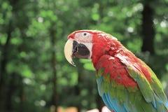 close upp papegojaarasammantr?de p? en filial royaltyfria foton