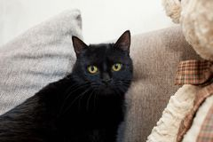 close upp svart katt med gula ögon i ett nytt hem Mentala och emotionella problem av katter royaltyfri foto