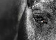 close-upportret van een paardnadruk bij oog stock foto's