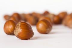 Close-ups of hazelnuts. On white background Stock Image