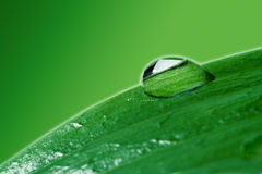 Close-ups water drops on plant Royalty Free Stock Images